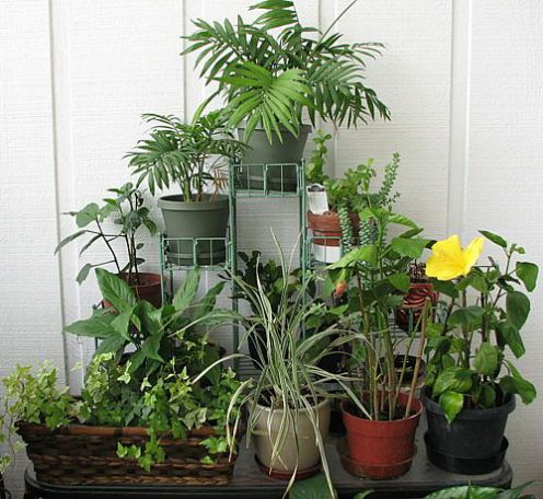 Indoor gardening indoor plants flower garden for Indoor garden design